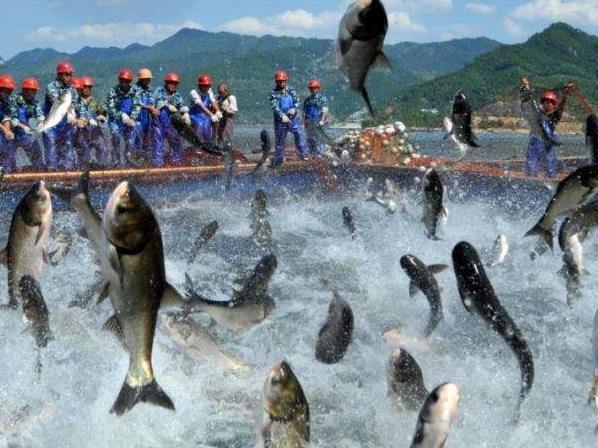 捕捞公司产业